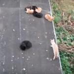 アスファルトが冷たい・・・、困ったネコちゃんが閃いた解決方法♪
