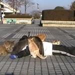猫まみれになる実験をする人(^◇^)