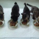 仲良く並んでお食事タイムの子猫達♪