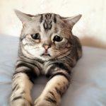 ネットで人気沸騰中の悲しい顔をした猫ちゃん
