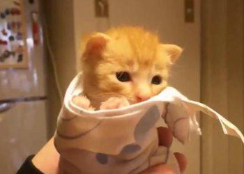 子猫の30日を30秒でまとめた動画が可愛い♪