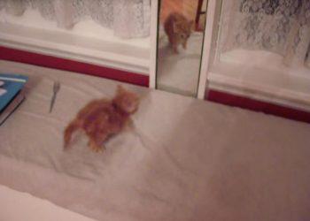 鏡に映る自分と戦う子猫ちゃん♪頑張りすぎた結果