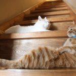 階段でまったりお昼寝をするネコさん達にほっこり
