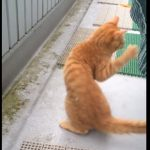 「わ~何ニャコレ??」奄美大島に住む猫が初めて雪をみて興奮