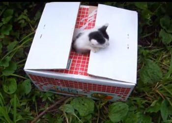 林道でダンボールに入って捨てられていた子猫ちゃんたちを保護