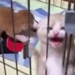 外で遊ぼうニャン~♪ 手をパタパタする子猫が可愛いすぎてとろける(^◇^)