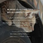 日産自動車が「猫バンバンプロジェクト」を開始!猫ちゃんの事故を無くそう!