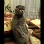 食い入るようにTV(スターウォーズ)を見るネコ