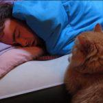 ご主人と遊びたいけれど、寝てるところを起こさないで待つ健気なネコさん
