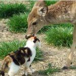 カップルのように仲良しな鹿と猫