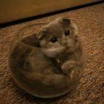 やっとボウルに入れた!ドヤ顔で見つめるネコちゃん