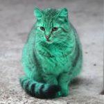塗料の上で寝てしまい、エメラルドグリーンになってしまった野良猫さん