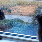 庭をみながら会話をしている、二匹のネコさん