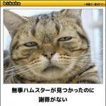 猫の画像でボケて!? 傑作選その6