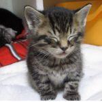 眠くてユラユラしている子猫、耐えきれずに可愛い行動に・・・(^◇^)