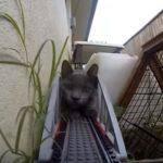 レゴ電車を鉄橋で待ち構えて通せんぼする猫さん