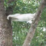 「ママ~助けてニャ~」木から降りられなくなった子猫ちゃんの救出劇