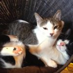 盲目の猫といつも一緒に生活してサポートする猫ちゃん