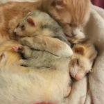 猫さんとフェレットが抱きつきながら仲良くお昼寝(^◇^)