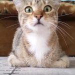 (ドキドキドキ・・・)キョロキョロしながらホラー映画を見る猫さん