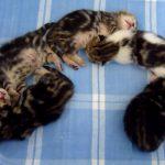 くっついて眠る子猫さん達が天使(^◇^)