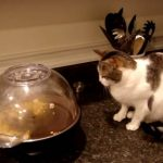 ポップコーン自動調理器とネコ