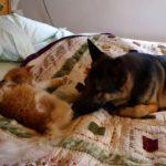 「どこいってたんだよぉ~~~」行方不明になっていたネコちゃん、親友ワンちゃんと再開する