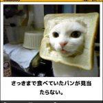 猫の画像でボケて!? 傑作選その5
