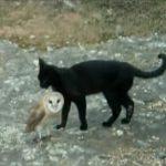 とっても仲良しな黒猫さんとメンフクロウさん
