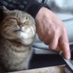 包丁を研ぎたい飼い主と甘えたい猫、両方のニーズがマッチしたらこうなった!?