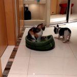 自分のベッドをなんとか取り返したワンちゃん、一方ニャンコは飼い主に訴える