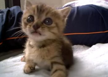 保護されたばかりの子猫、無邪気に遊ぶ♪