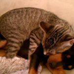 ワンちゃんに抱きつきながら寝るネコちゃん