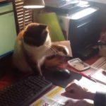 パソコンを使いたい飼い主とニャンコのマウスの壮絶な取り合い
