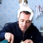 【猫帽子?】 飼い主さんの食事中に頭の上にのり、邪魔をする猫さん