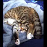 明らかにおかしな体勢で寝ているネコさん・・・(^◇^)