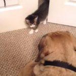 子猫と大きなワンちゃんとの出会い、怖くて逃げたのは・・・?