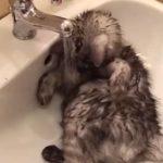蛇口をひねると飛んできて水浴びをする猫ちゃん