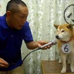 柴犬マリちゃんの小声コンテンスト