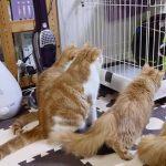 犬に初めて出会った猫一家がワンちゃんを凝視する