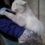 おばぁちゃんのおんぶが大好きな甘えん坊猫ちゃん