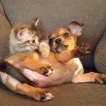 押し合いをしながらケンカをする、子ネコと子イヌが可愛い♪