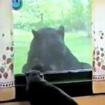 猫ちゃんが、窓から外を見ていると大きな熊が現れる(*'ω'*)
