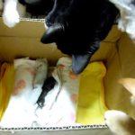 産み捨てられた子猫を保護してつれてきたら、先住猫さんが集まってきた