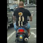 バイクの後ろのバックパックで移動するポメラニアンさん
