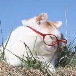 赤メガネの似合う猫ちゃん♪