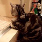 飼い主さんが好きすぎて、お風呂から上がるのを待ってるネコちゃん