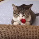 失敗するところを見られたら八つ当たりする猫ちゃん