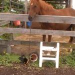 猫ちゃんを遊ばせるお馬さん、ほのぼのとした光景にほっこり♪