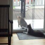 お友達が帰る時に、「ねぇ・・まって・・・」する猫ちゃん